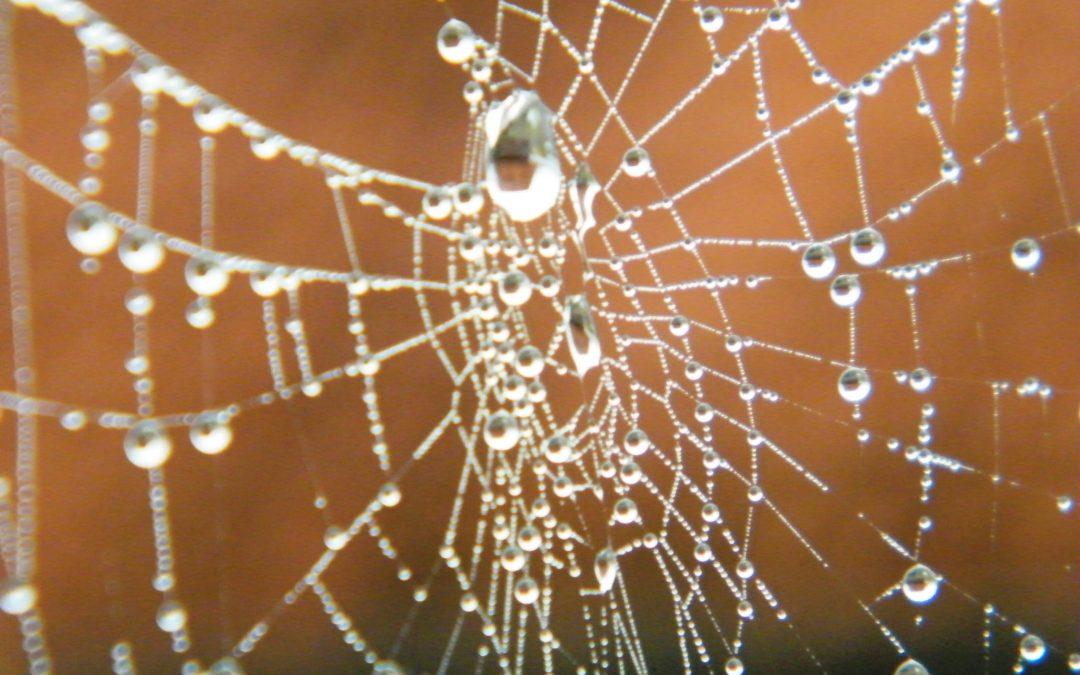 Waarom Spinnenweb teksten