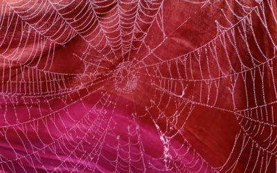 Spinnenwebben en (wetenschappelijke) kennis